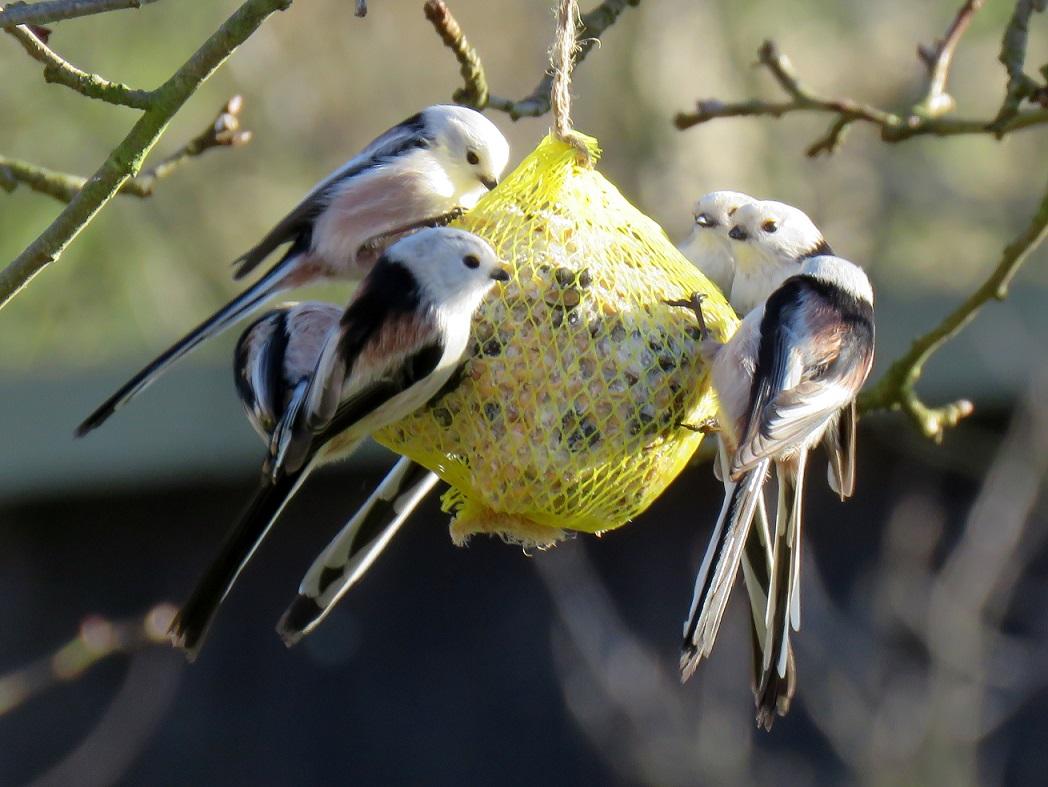 Víte čím a jak správně přikrmovat ptáky?