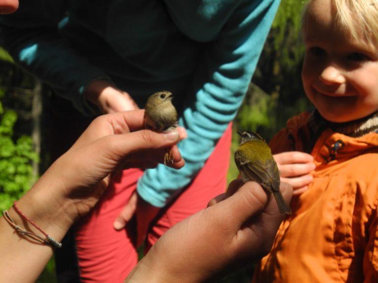 Ve volných chvílích probíhaly ukázky odchytu a kroužkování ptáků... Foto: M. Kobierská