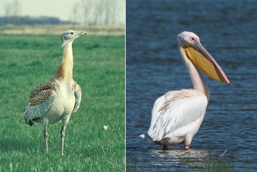 Dva největší ptáci Evropy navštívili jih Moravy