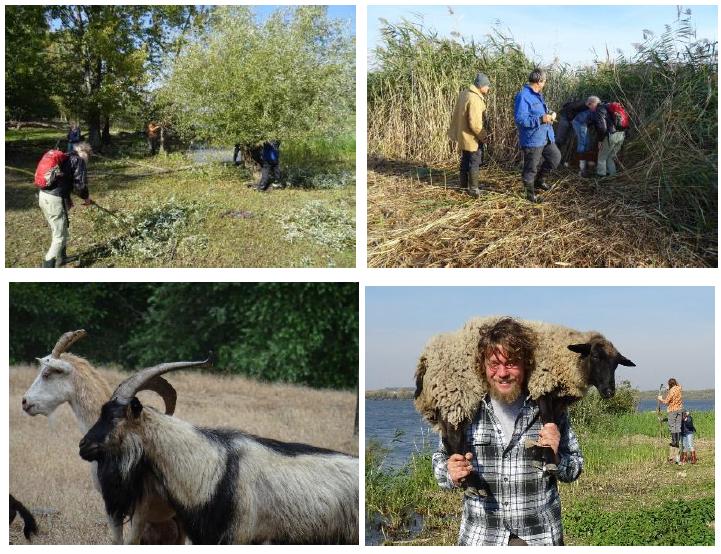 II. pracovní + volný + mezinárodní + ornitologický tábor v PR Věstonická nádrž