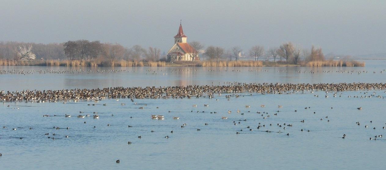 Mezinárodní sčítání vodních ptáků – leden 2021