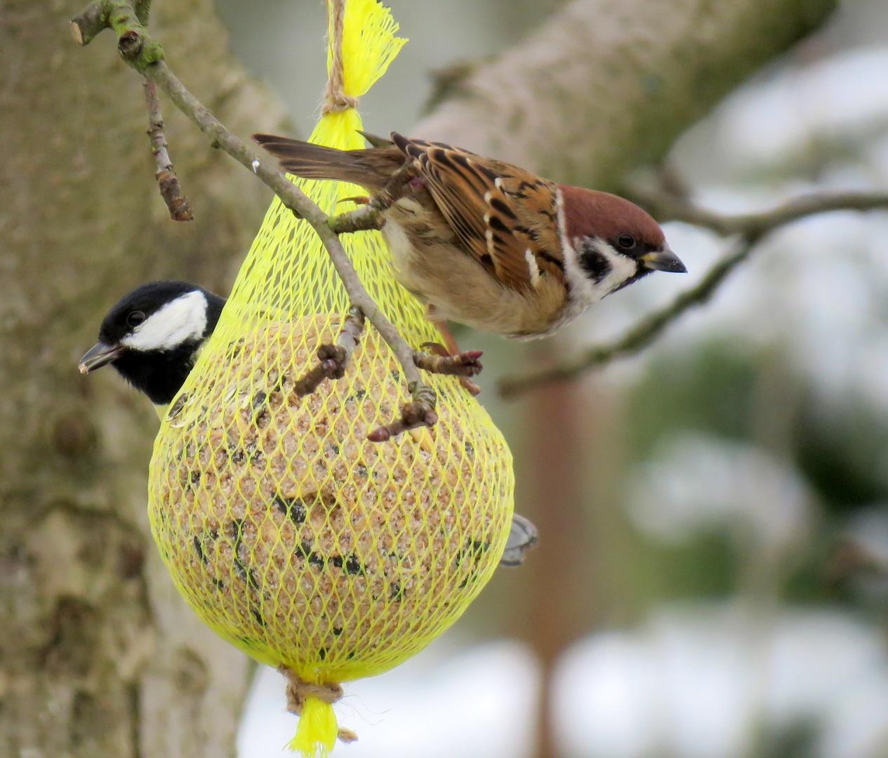 Správné přikrmování pomáhá ptactvu přežít zimu