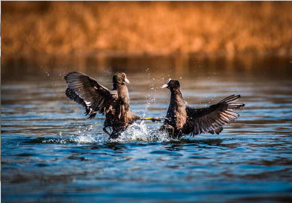 Za ptáky i v době karantény