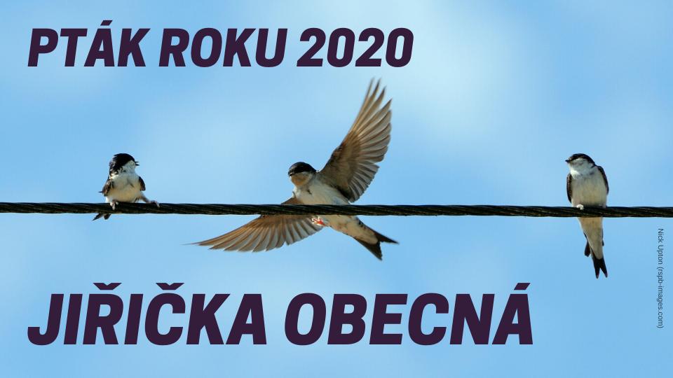pták-roku-2020_banner