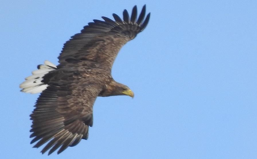 Meopta – optika zve pozorovatele ptactva do Tovačova